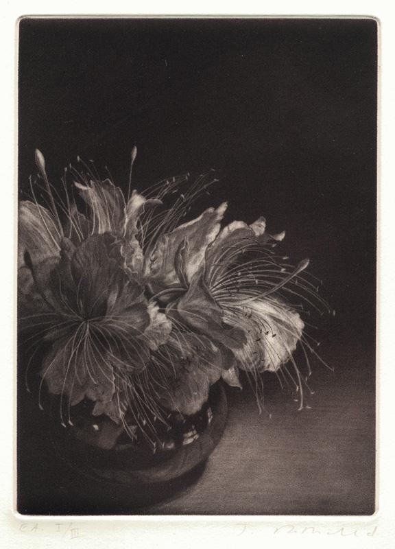 21. Judith Rothchild (American born 1950) Fleur de caprier