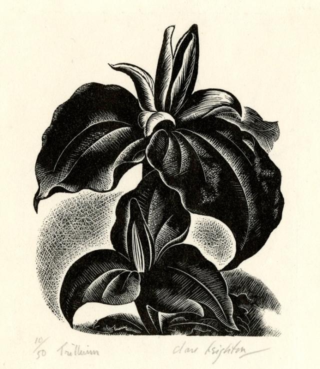 11.  Clare Leighton  (American born in England, 1898-1989)  Trillium