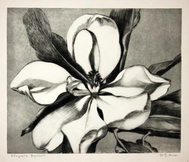 20. William S. Rice (American 1873-1963)  Magnolia Blossom