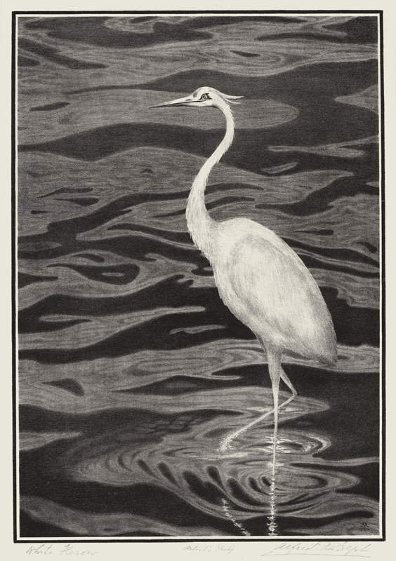 Alfred Rudolph (American 1881-1942)  White Herron, lithograph, 1934